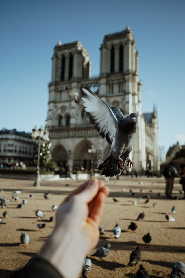 Đám cháy đã phá hủy Nhà thờ Đức Bà ở Paris: Nơi đây từng là biểu tượng của sự bình yên của cả nước Pháp - Ảnh 8.