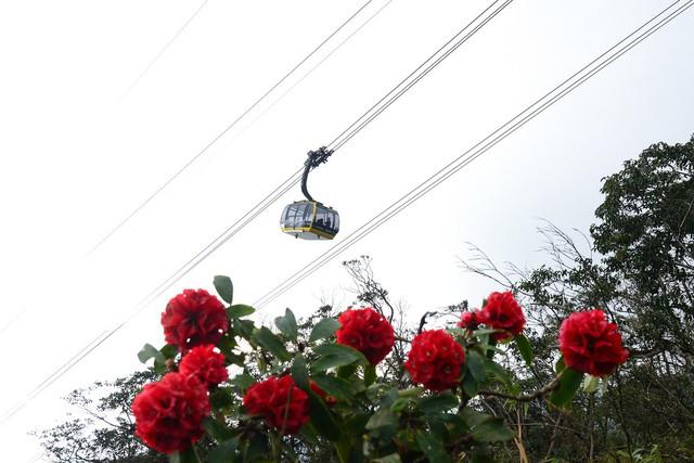 Cận cảnh hoa đỗ quyên ngợp trời Fansipan - Ảnh 4.