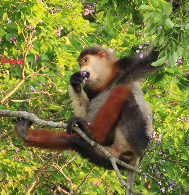 Mê mẩn mùa hoa tím trên bán đảo Sơn Trà - Ảnh 10.