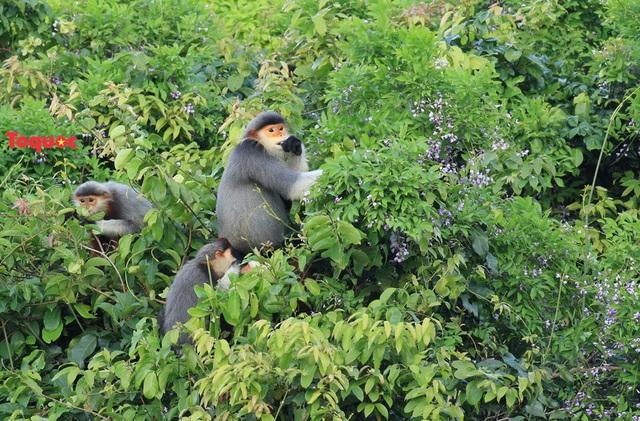 Mê mẩn mùa hoa tím trên bán đảo Sơn Trà - Ảnh 14.