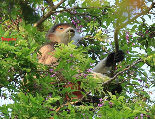 Mê mẩn mùa hoa tím trên bán đảo Sơn Trà - Ảnh 15.
