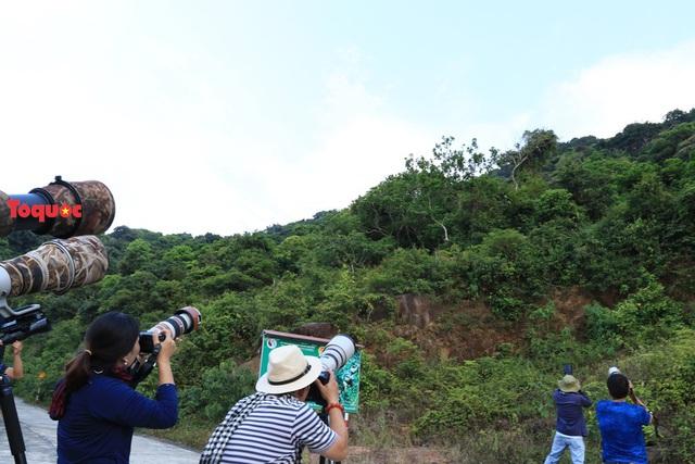 Mê mẩn mùa hoa tím trên bán đảo Sơn Trà - Ảnh 16.