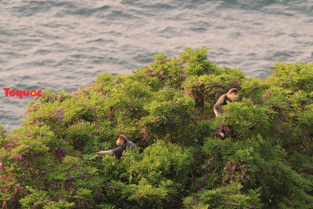 Mê mẩn mùa hoa tím trên bán đảo Sơn Trà - Ảnh 17.