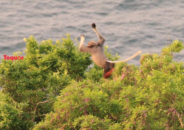 Mê mẩn mùa hoa tím trên bán đảo Sơn Trà - Ảnh 18.
