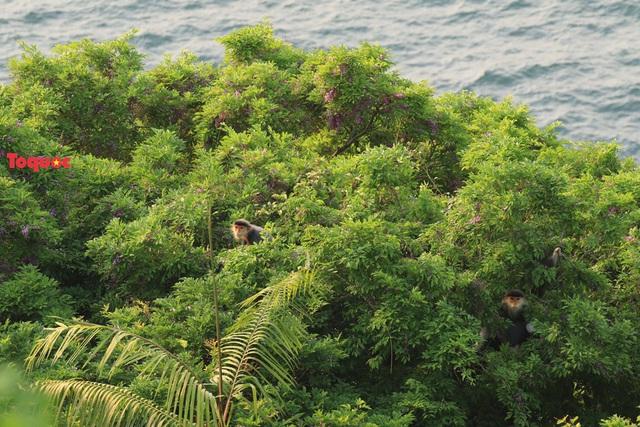 Mê mẩn mùa hoa tím trên bán đảo Sơn Trà - Ảnh 19.