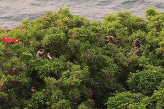 Mê mẩn mùa hoa tím trên bán đảo Sơn Trà - Ảnh 22.