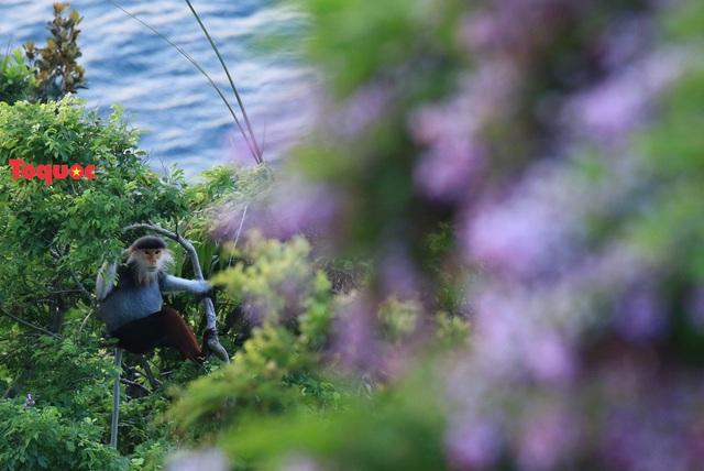 Mê mẩn mùa hoa tím trên bán đảo Sơn Trà - Ảnh 20.