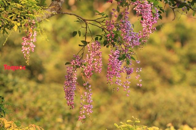Mê mẩn mùa hoa tím trên bán đảo Sơn Trà - Ảnh 4.