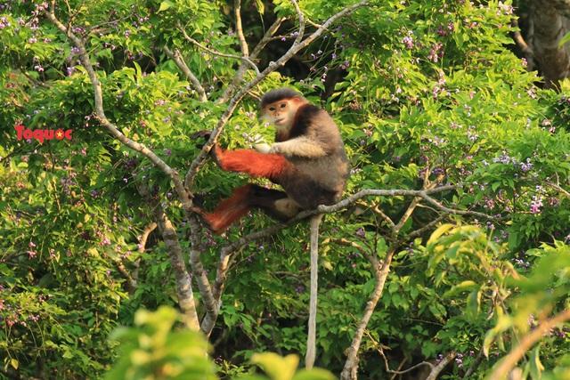 Mê mẩn mùa hoa tím trên bán đảo Sơn Trà - Ảnh 8.