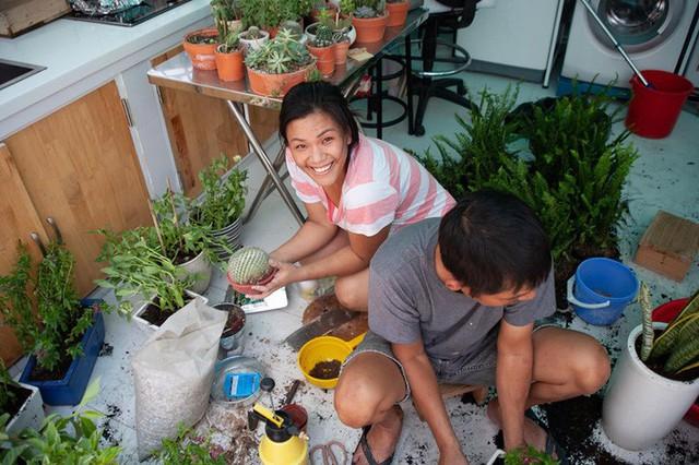 Từ những chậu hoa bị bỏ đi, ca sĩ Phương Vy Idol đã tạo nên khu vườn xanh tốt tại nhà - Ảnh 1.