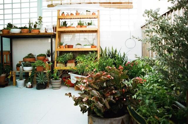 Từ những chậu hoa bị bỏ đi, ca sĩ Phương Vy Idol đã tạo nên khu vườn xanh tốt tại nhà - Ảnh 8.