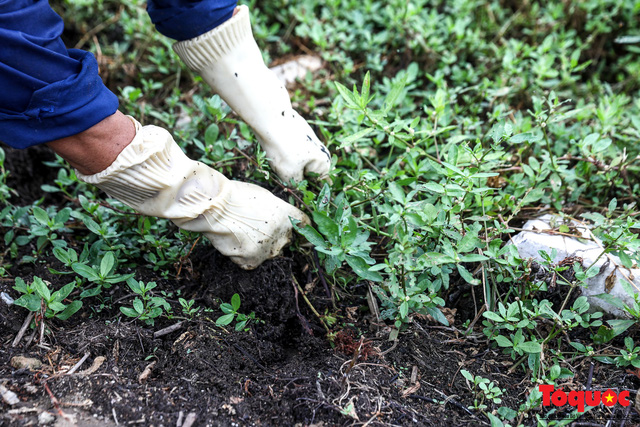 Hà Nội tăng cường công nhân dọn dẹp công viên 300 tỷ  đang bị ô nhiễm nặng - Ảnh 7.