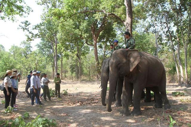 Đắk Lắk: Đón hơn 86.000 lượt du khách dịp Lễ 30/4 - 01/5 - Ảnh 1.