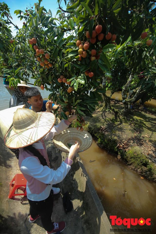 Trải nghiệm tour độc đáo miệt vườn Thanh Khê để hái vải trên sông - Ảnh 6.