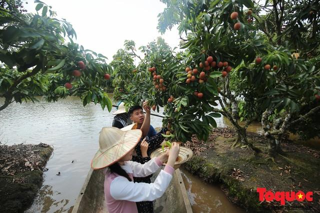 Trải nghiệm tour độc đáo miệt vườn Thanh Khê để hái vải trên sông - Ảnh 9.