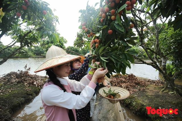 Trải nghiệm tour độc đáo miệt vườn Thanh Khê để hái vải trên sông - Ảnh 7.