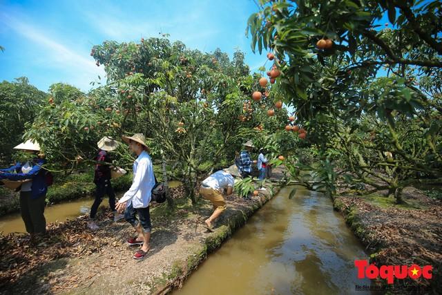 Trải nghiệm tour độc đáo miệt vườn Thanh Khê để hái vải trên sông - Ảnh 10.