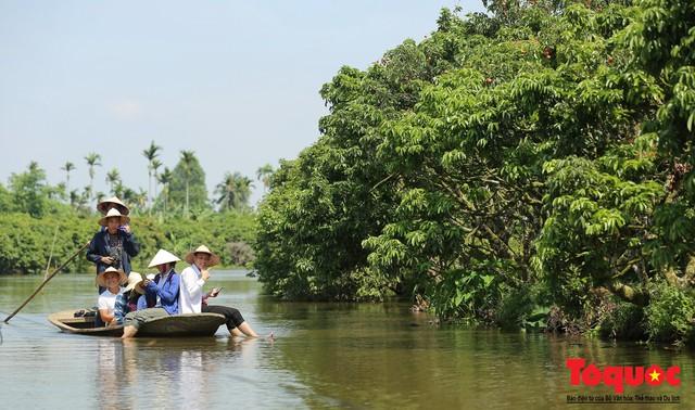 Trải nghiệm tour độc đáo miệt vườn Thanh Khê để hái vải trên sông - Ảnh 2.