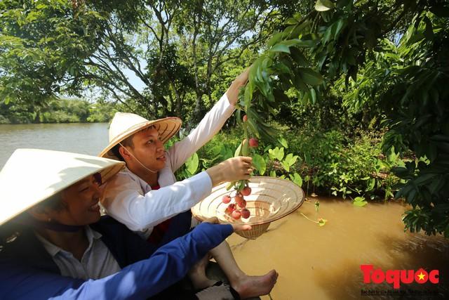 Trải nghiệm tour độc đáo miệt vườn Thanh Khê để hái vải trên sông - Ảnh 3.