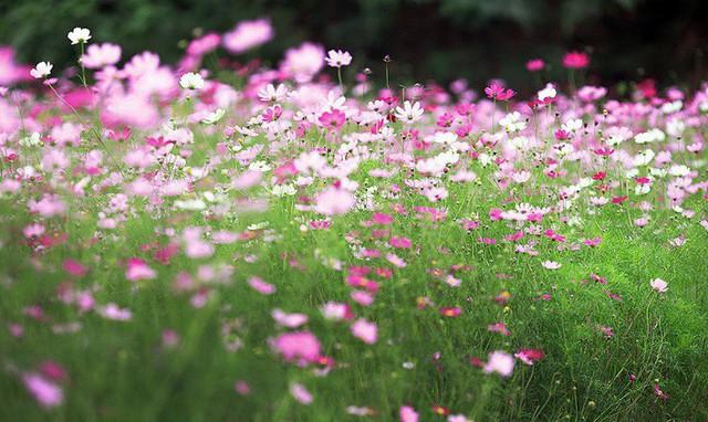 Nhiều người lựa chọn 5 giống hoa này để trồng vì chỉ cần cắm xuống là mọc tốt um - Ảnh 4.
