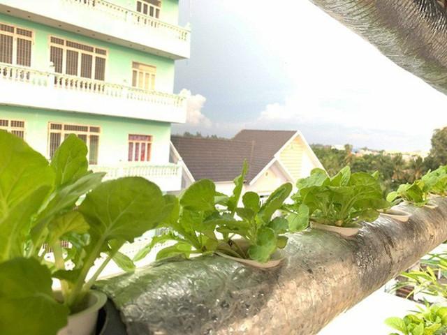 Vườn rau thủy canh ăn không xuể trên sân thượng nhà diễn viên Kha Ly - Thanh Duy - Ảnh 6.