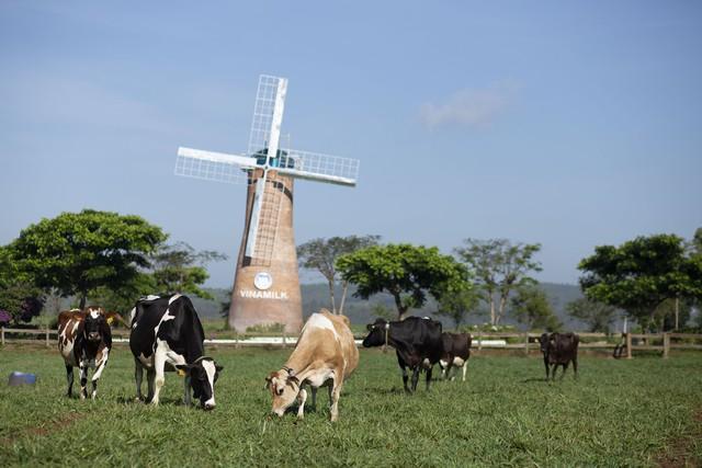 Vinamilk là đại diện duy nhất của châu Á trình bày về xu hướng organic tại Hội nghị sữa toàn cầu 2019 tại Bồ Đào Nha - Ảnh 8.