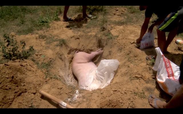 Phát hiện xe tải chở xác lợn từ vùng có dịch tả lợn châu Phi về Đà Nẵng tiêu thụ - Ảnh 2.