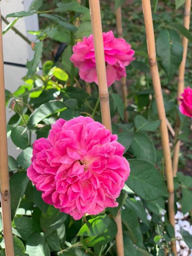 Căn biệt thự ngập tràn hoa và cây ăn quả của nữ ca sĩ Vy Oanh - Ảnh 14.
