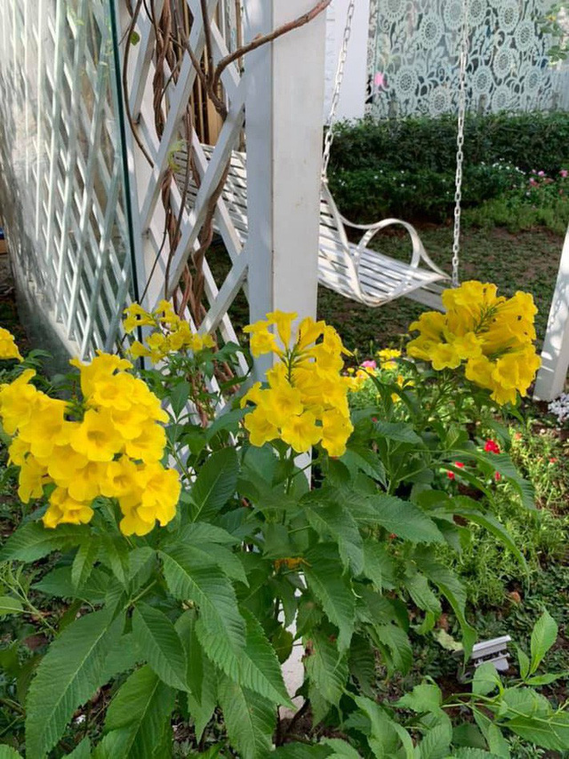 Căn biệt thự ngập tràn hoa và cây ăn quả của nữ ca sĩ Vy Oanh - Ảnh 16.
