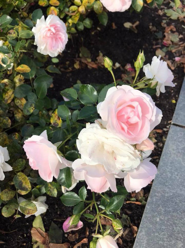 Căn biệt thự ngập tràn hoa và cây ăn quả của nữ ca sĩ Vy Oanh - Ảnh 19.