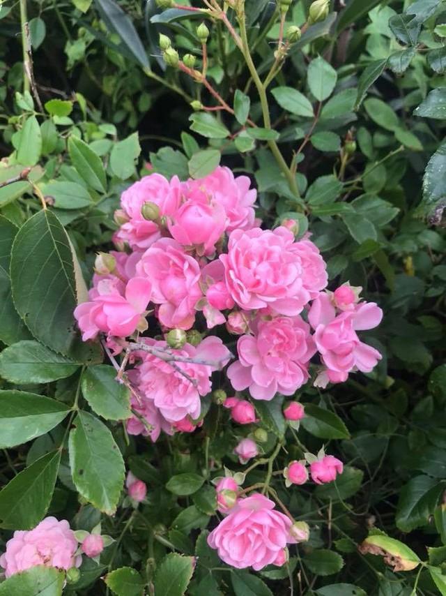 Căn biệt thự ngập tràn hoa và cây ăn quả của nữ ca sĩ Vy Oanh - Ảnh 20.