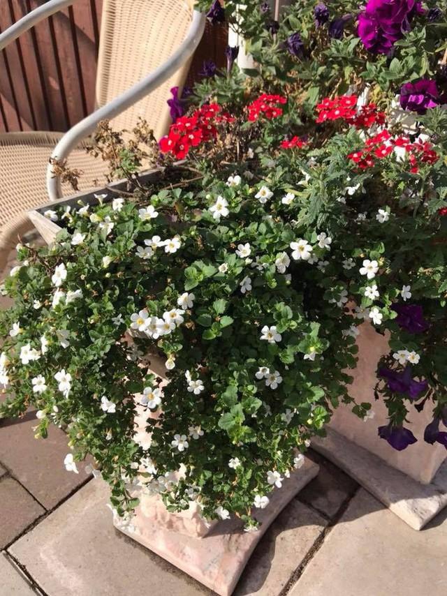Căn biệt thự ngập tràn hoa và cây ăn quả của nữ ca sĩ Vy Oanh - Ảnh 21.