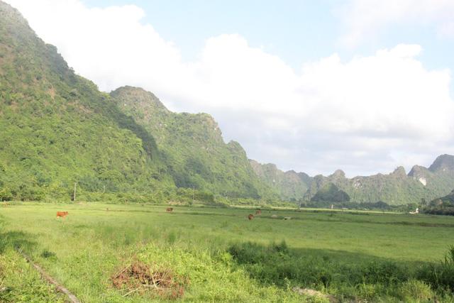 Làng Việt Hải: Chốn dừng chân thú vị trong hành trình khám phá di sản Hạ Long - Ảnh 7.