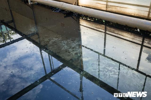Ảnh: Cận cảnh đáy sông Tô Lịch sau 3 tuần thí điểm công nghệ Nhật Bản phân hủy bùn hữu cơ - Ảnh 4.