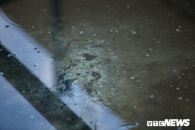 Ảnh: Cận cảnh đáy sông Tô Lịch sau 3 tuần thí điểm công nghệ Nhật Bản phân hủy bùn hữu cơ - Ảnh 5.