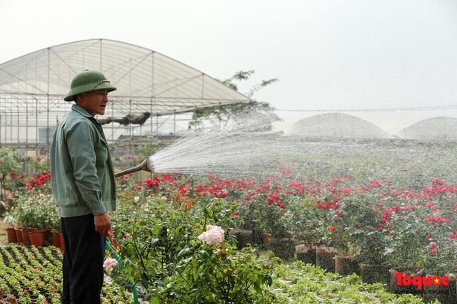Rực rỡ sắc xuân ở làng hoa ven sông Hồng - Ảnh 9.