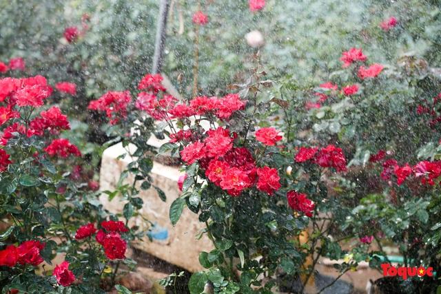 Rực rỡ sắc xuân ở làng hoa ven sông Hồng - Ảnh 8.