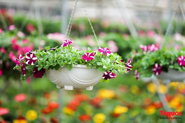 Rực rỡ sắc xuân ở làng hoa ven sông Hồng - Ảnh 4.