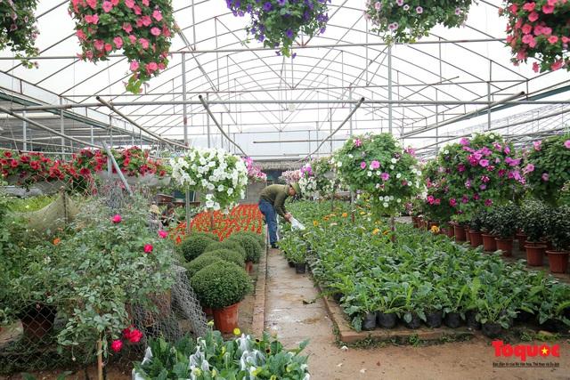Rực rỡ sắc xuân ở làng hoa ven sông Hồng - Ảnh 1.