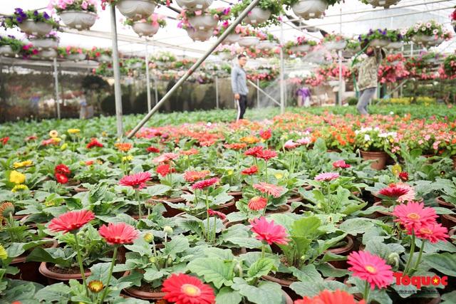 Rực rỡ sắc xuân ở làng hoa ven sông Hồng - Ảnh 5.