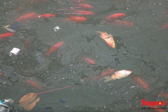 Hà Nội: Nước hồ Văn Quán chuyển màu đen kịt, nổi váng, cá chết bốc mùi hôi thối sau ngày tiễn ông táo về trời - Ảnh 6.
