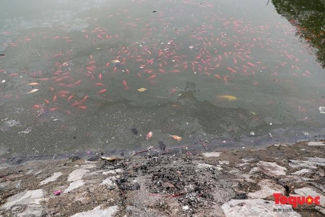 Hà Nội: Nước hồ Văn Quán chuyển màu đen kịt, nổi váng, cá chết bốc mùi hôi thối sau ngày tiễn ông táo về trời - Ảnh 7.