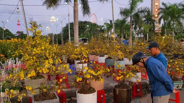 Nhiều người ở Đà Nẵng mua đào Nhật Tân để chơi Tết - Ảnh 1.