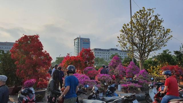 Nhiều người ở Đà Nẵng mua đào Nhật Tân để chơi Tết - Ảnh 2.