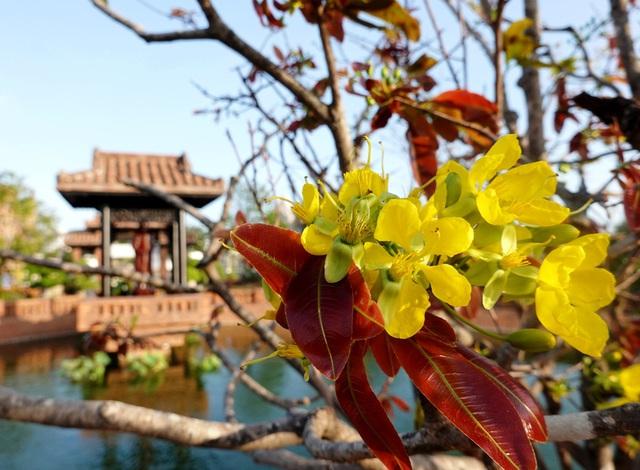 Ngắm mai vàng đón xuân tại Thanh Minh Tự - Ảnh 1.