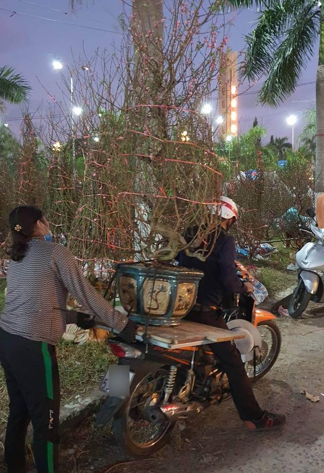 Nhiều người ở Đà Nẵng mua đào Nhật Tân để chơi Tết - Ảnh 6.