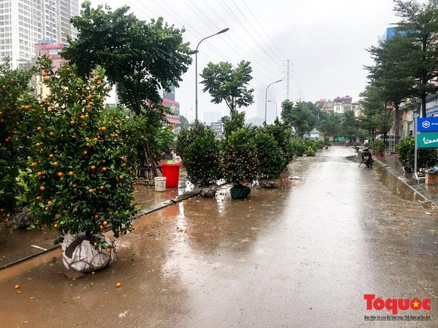 Hà nội đổ mưa lớn: Đào, quất giảm giá mạnh ngày 30 Tết, cây đào giá cả triệu bạc biến thành củi chỉ sau 1 ngày - Ảnh 3.