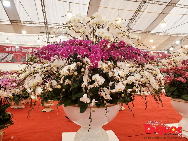 Vượt hàng vạn cây số lan hồ điệp Đà Lạt khoe sắc ở Thủ Đô, có những chậu giá hơn 100 triệu đồng - Ảnh 15.