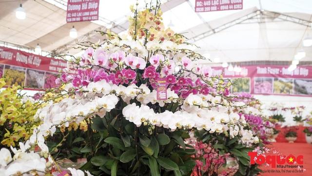 Vượt hàng vạn cây số lan hồ điệp Đà Lạt khoe sắc ở Thủ Đô, có những chậu giá hơn 100 triệu đồng - Ảnh 14.