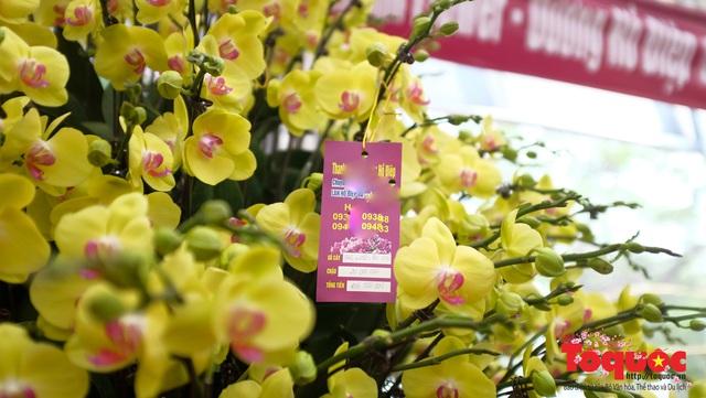 Vượt hàng vạn cây số lan hồ điệp Đà Lạt khoe sắc ở Thủ Đô, có những chậu giá hơn 100 triệu đồng - Ảnh 13.